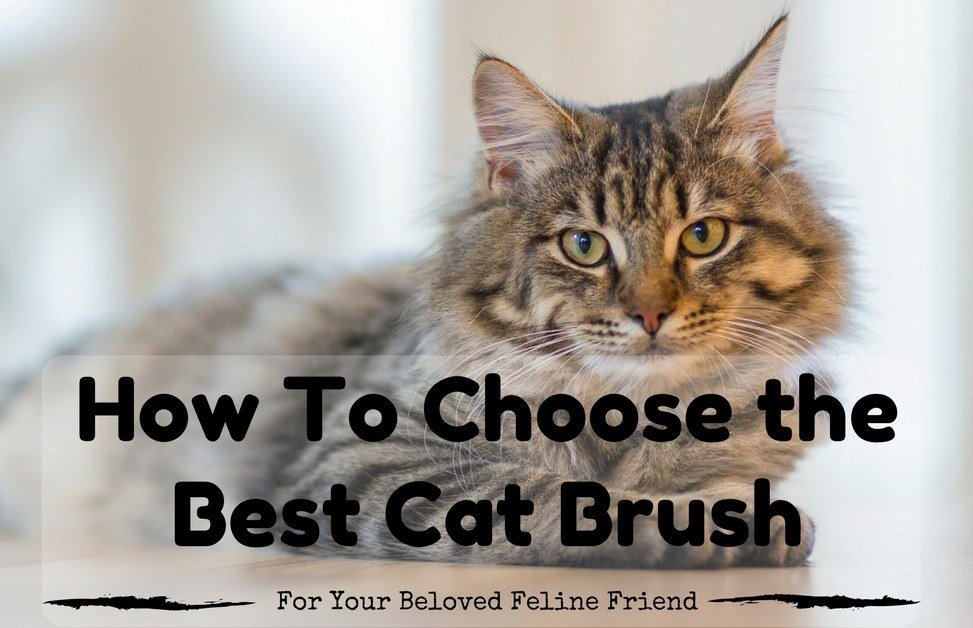Best-Cat-Brush