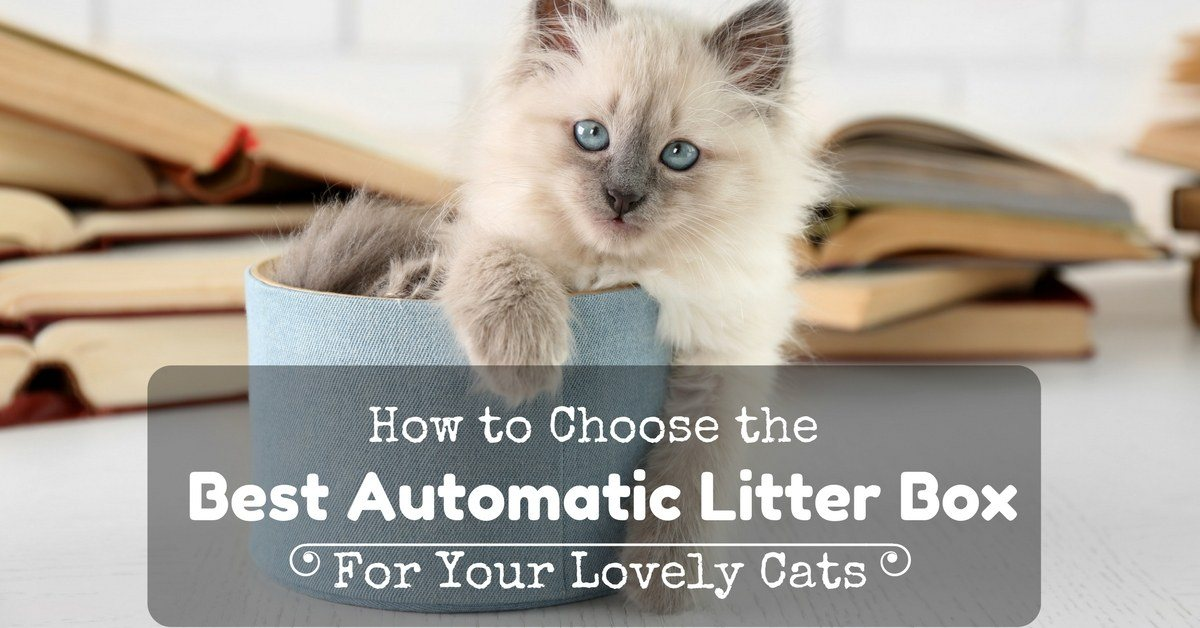 Best-Automatic-Litter-Box-1200x