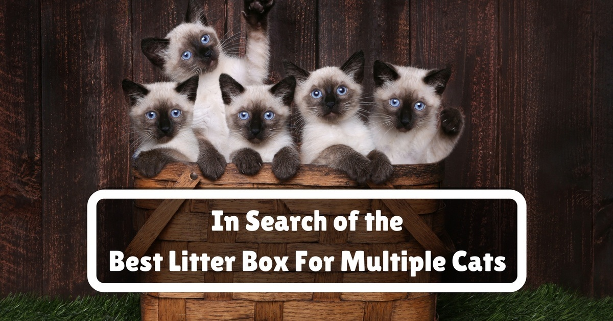 Best-Litter-Box-For-Multiple-Cats-1200x