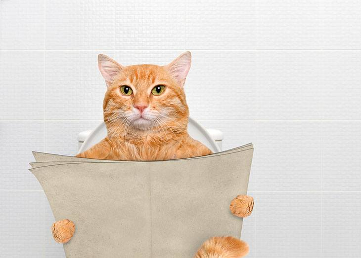 Provide-Your-Cats-with-Their-Own-Space-and-Privacy-730