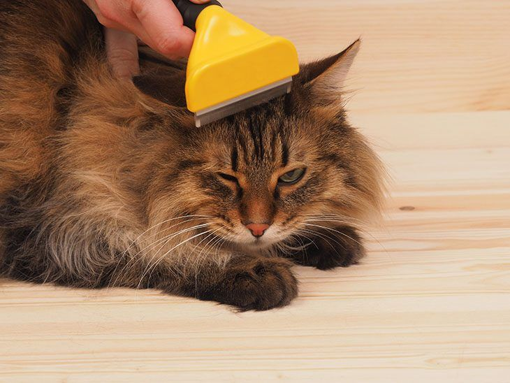 Shedding-Blades-for-cat-730