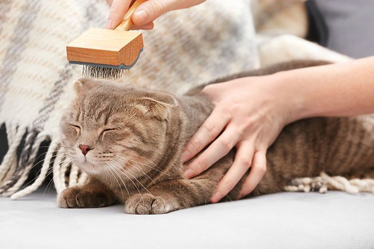 Slicker-Brushes-for-cat-730