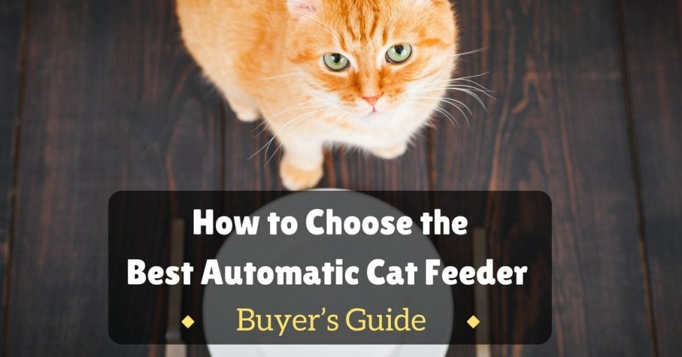 Best-Automatic-Cat-Feeder-1200