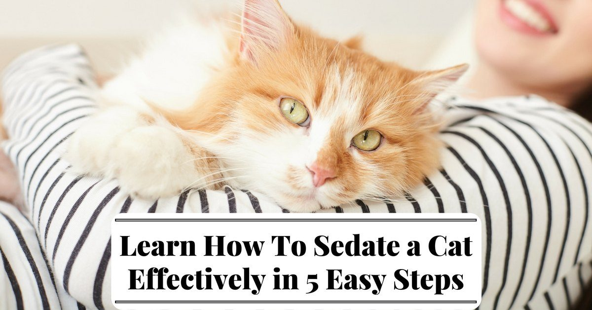 Learn-How-To-Sedate-a-Cat-Effectively-in-5-Easy-Steps-1200x-ko-pts