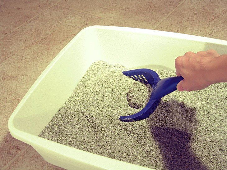 Dirty-kitty-litter-box-730