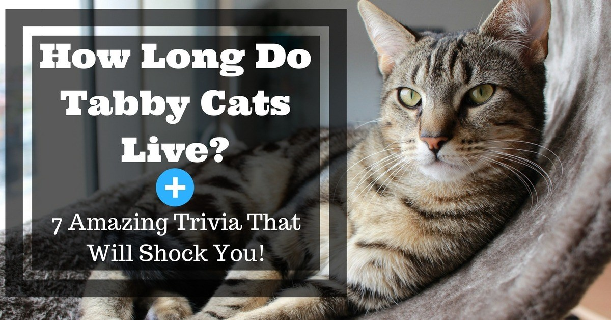 How-Long-Do-Tabby-Cats-Live-7-Amazing-Trivia-That-Will-Shock-You-1200x