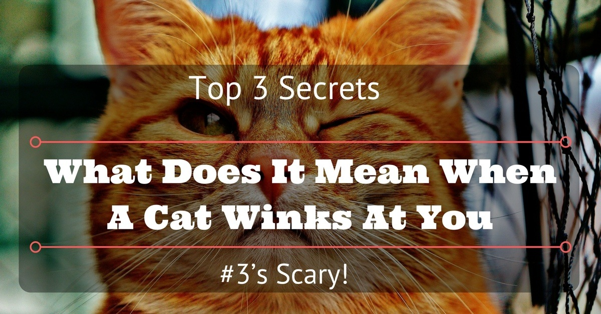 What-Does-It-Mean-When-A-Cat-Winks-At-You-1200