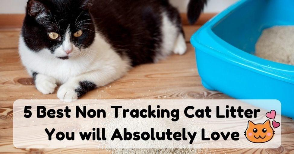 Best-Non-Tracking-Cat-Litter-1200